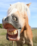 Bildergebnis für pferdegebiss